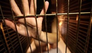 Dog Cage Slut